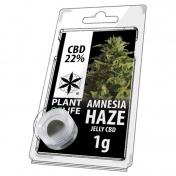 Plant of Life Amnesia Haze 22% CBD Jelly 1gr