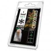 Plant of Life Chololoco Feminized - 1 Σπόρος