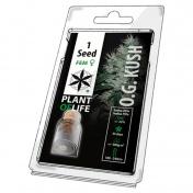 Plant of Life OG Kush Feminized - 1 Σπόρος