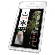 Plant of Life White Widow AutoFem - 1 Σπόρος