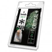 Plant of Life Critical+ Feminized - 3 Σπόροι