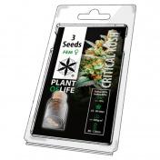 Plant of Life Critical Kush Feminized - 3 Σπόροι