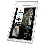 Plant of Life Doctor Kush HighCBD Medical Feminized - 3 Σπόροι