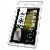 Plant of Life Jack Herer Feminized - 3 Σπόροι