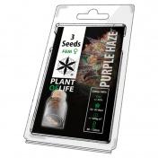 Plant of Life Purple Haze Feminized - 3 Σπόροι