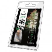 Plant of Life Super Silver Haze Feminized - 3 Σπόροι