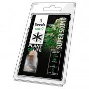 Plant of Life Super Skunk Feminized - 3 Σπόροι
