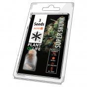 Plant of Life Super Skunk AutoFem - 3 Σπόροι