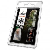Plant of Life White Widow AutoFem - 3 Σπόροι