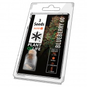 Plant of Life Blueberry 60 AutoFem - 3 Σπόροι
