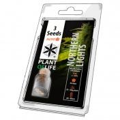 Plant of Life Northern Lights AutoFem - 3 Σπόροι