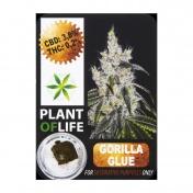 Plant Of Life Gorilla Glue 3,8% CBD Solid 1gr